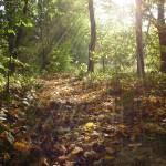 Rydułtowy jesienią